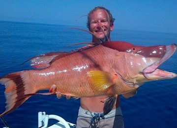 Hogfish or Hog Snapper, Sanibel Fishing & Captiva Fishing, Sanibel Island, Sunday, December 10, 2017, [File Photo - Wednesday, February 8, 2017].