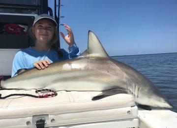 Spinner Shark, Catch & Release, Sanibel Island Fishing Charters & Captiva Island Fishing Charters, Sanibel Island, Saturday, June 23, 2018.
