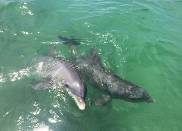 Captiva Fishing, Dolphins Playing, July 11!